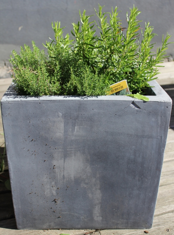 Herb garden, Thyme and Rosemary