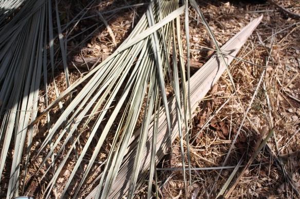 Palmblad för att korgflätning